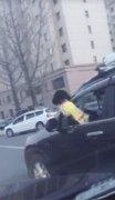 """小狗钻出驾驶室车窗""""兜风"""",司机因妨碍安全驾驶被罚款记分"""